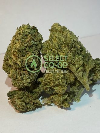 Hash Plant | Weed Delivery in DC