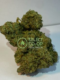 Grease Monkey | Weed Delivery in DC
